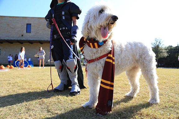 Gracie the Golden Doodle was dressed as Harry Potter.